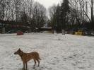 Hundeplatz_1