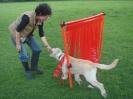 Training in der Hundeschule