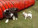 Welpenschule in der Hundeschule